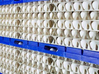 Bewaarplaats-eieren-400x300